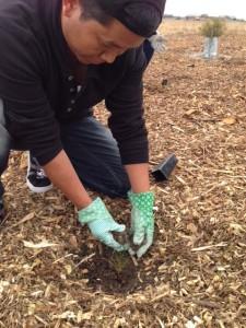 An AMES student replanting at Altona Coatal Park.